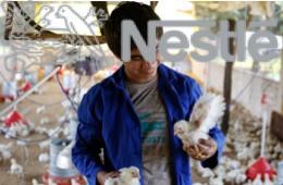 Nestle_csv_prize
