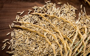 Close_up_of_threshed_kernzar_perennial_grain_seeds