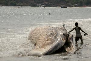 Beached_whale_teen