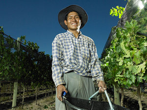 Sustainably_grown_farmworker