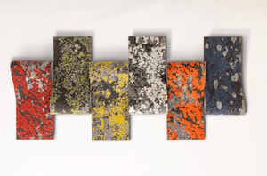 Mohawkgroup_lichen_palette_2