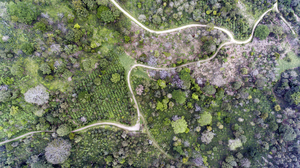 Coffee_plantation_seen_from_a_drone_in_nicaracgua_©_giuseppe_cipriani_for_utz