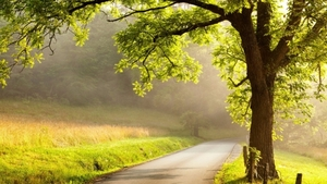 Tree_country_road_istock-500891249_0