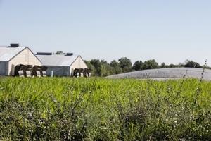 Hog_farms_and_biomas_digester_copy