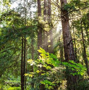 Thumbnail-hero-e-forest