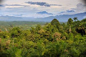 Oil_palm_landscape_©_rspo