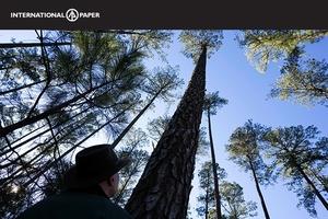Ip-familyforest-