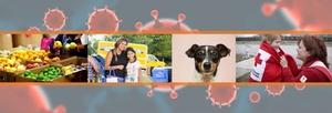 Charity_response_coronavirus-covid19318202