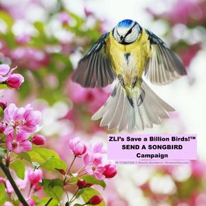 Send_a_songbird