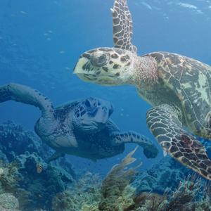 Sea_turtle_composite