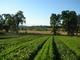 Portland-farm_2
