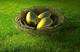 Sri-golden-eggs