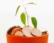 Plant-money
