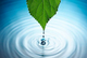 Leaf-water-drop-ripple-csrlive
