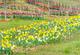 Arwl-tulips-csrlive