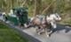 Csrlive_horses