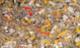 Csrlive_plastic_10