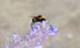 Csrlive_bees