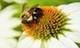 Csrwire_wildlife
