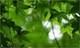 400x238_leaves