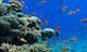 Coral_reef_biodiversity